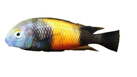 Akvarijní sladkovodní