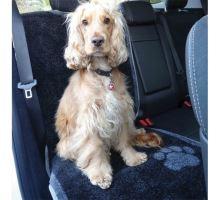 PET REBELLION- Ochranný potah na sedadlo, 57x140cm